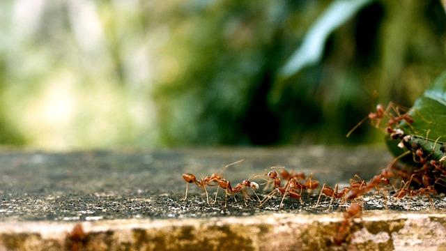 jak na mravence