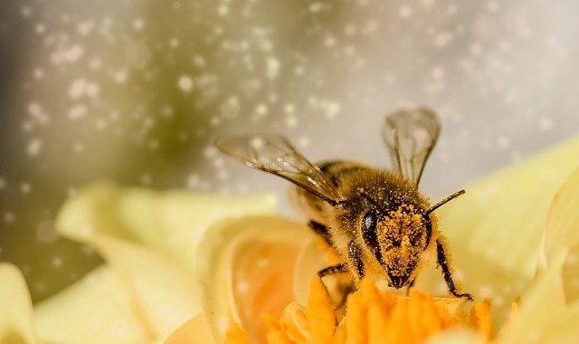 jak se zbavit otoku po včelím bodnutí